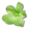 HOKUS - Miltonia 10 szt.  pistacjowa