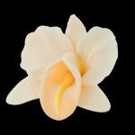 Kwiaty cukrowe - Storczyk opak. 10 szt. ecru