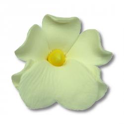 HOKUS - Miltonia 10 szt.  biała