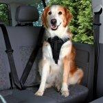 Trixie Szelki samochodowe Dog Comfort dla psa rozmiar M - 50-65cm/20mm