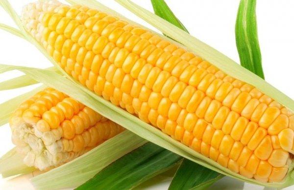 Kukurydza w kolbach