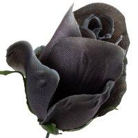 Róża Pąk Ciemny Szary [Komplet 12szt]