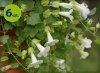 Lofos biały 6 sztuk