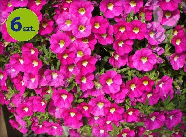 Calita (Million bells) różowa 6 sztuk