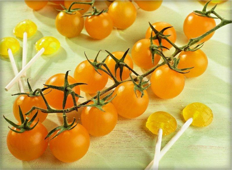 Pomidor szczepiony Solena Yellow