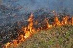 Pożary traw i lasów