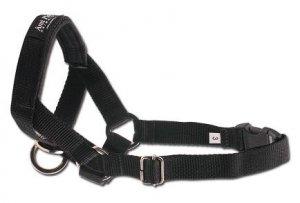 Amiplay Halter XS N1 Yorkshire Terrier czarny