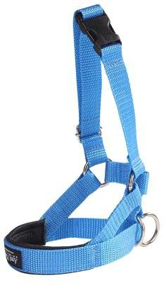 Amiplay Halter XS N1 Yorkshire Terrier niebieski