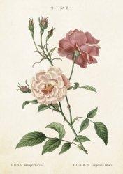 Karnet ST244 B6 + koperta Róża 2 sztuki