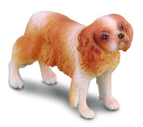 Pies rasy Spaniel Cavalier King Charles