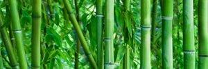Ceramika Końskie Bamboo Glass Inserto Rect. 2x25x75