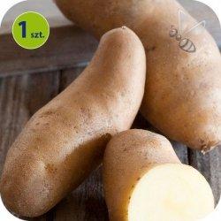 Ziemniak Eco La Ratte 1 sztuka