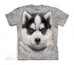 Siberian Husky Puppy - The Mountain - Junior