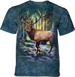 Sunlit Elk - The Mountain