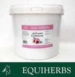 Jeżówka - Echinacea 0,5 kg - EQUIHERBS