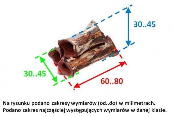 Rurkobloczek Krewetkowy Jasny 3-Rurki