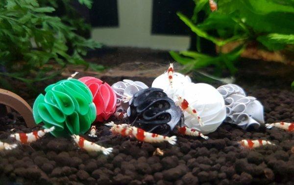 Baby Shrimp Shelters Szary 20 szt