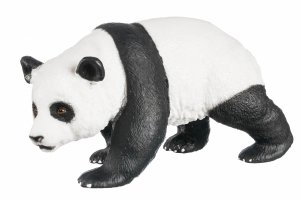 Panda Samiec