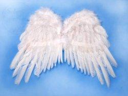 Skrzydła anioła białe 50x35cm