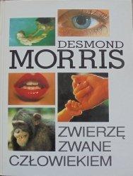 Desmond Morris • Zwierzę zwane człowiekiem