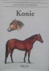 Helena Kholova • Konie