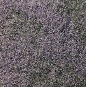 Woodland WF177 Flowering Foliage Purple - Listowie fioletowe