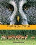 Zwierzęta Polski The wildlife of Poland
