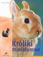 Króliki miniaturowe Zwierzęta w domu