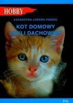 Kot domowy czyli dachowiec