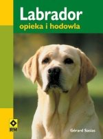 Labrador opieka i hodowla