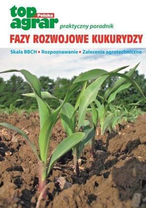 Fazy rozwojowe kukurydzy