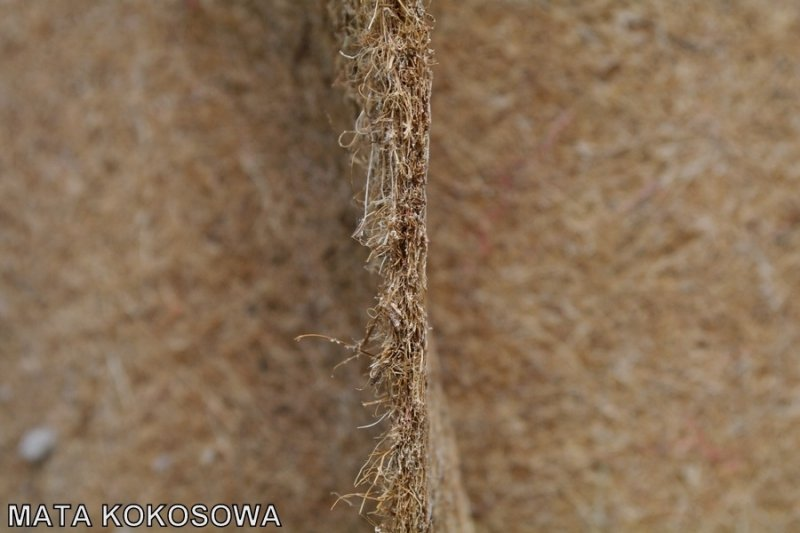 Mata kokosowa