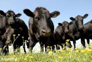 Dla Bydła