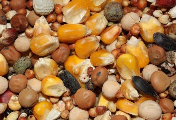 Mieszanka dla gołębi BP bez pszenicy