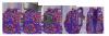 Plecak CoolPack VIPER kolorowe trójkąty, TRIANGLE MOSAIC (81150CP)