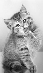 Ręcznik dziecięcy Kotek z kotem 30 x 50 cm (04T)