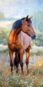 Ręcznik plażowy kąpielowy 70x140 HORSES Konie (WZÓR25)