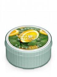 Kringle Candle - Citrus and Sage - Świeczka zapachowa - Daylight (35g)