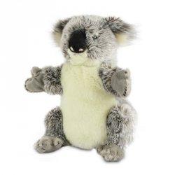 Dante Pacynka National Geographic Koala