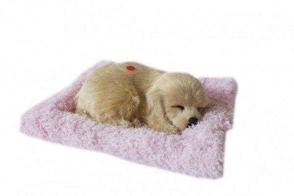 ASKATO Maskotka interaktywna Śpiący piesek na poduszcze - golden