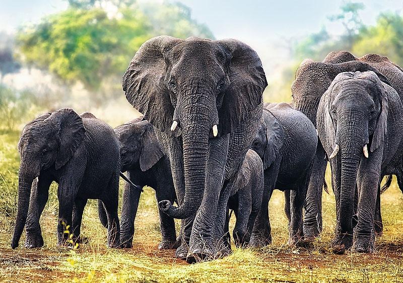 Puzzle 1000 Trefl 10442 Afrykańskie Słonie