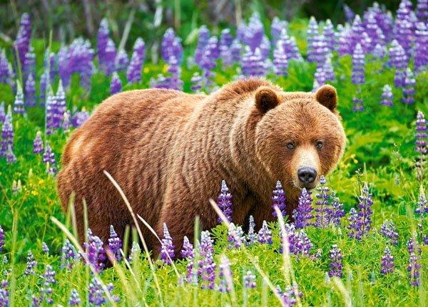 Puzzle 120 Castorland B-13425 Niedźwiedź