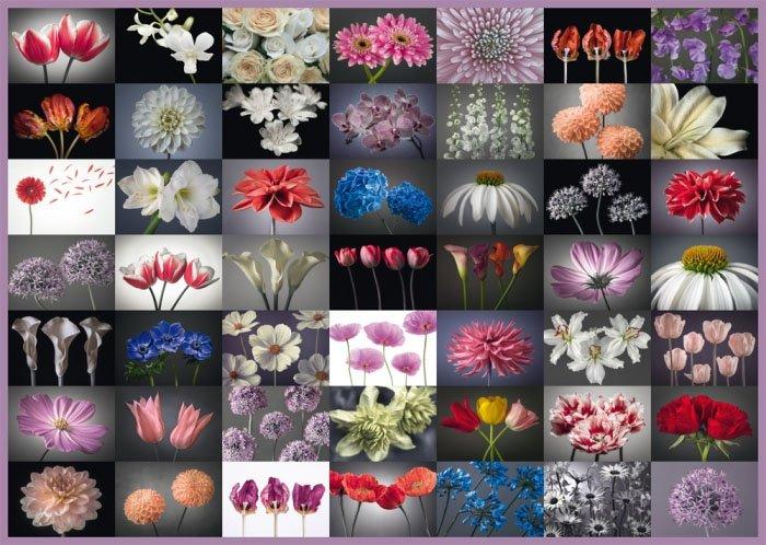 Puzzle 2000 Schmidt 58297 Kwiaty - Kolaż