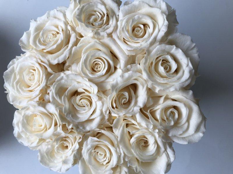 Kremowe CHAMPAGNE żywe WIECZNE róże w średnim VELVET białym boxie