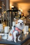 ubranka dla psów, moda dla psów