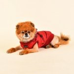 Winter jacket with harness FROST red Puppia