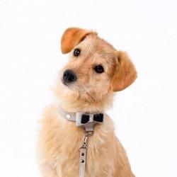 Luksusowa obroża PRESTIGE beżowa + Dogs