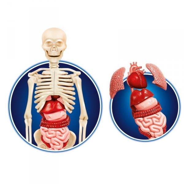 Clementoni Ciało Ludzkie interaktywny zestaw edukacyjny
