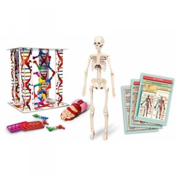 Ciało Ludzkie Anatomia Clementoni