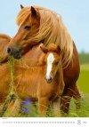 Kalendarz ścienny wieloplanszowy Horses Dreaming 2021 - sierpień 2021